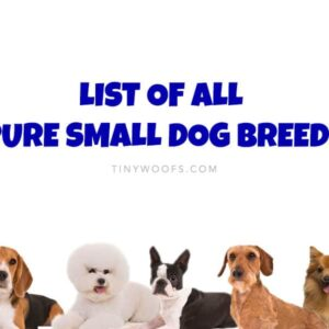 All Pure Small Dog Breeds
