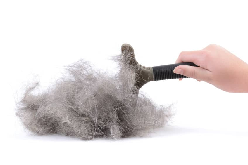 Dog hair from brushing